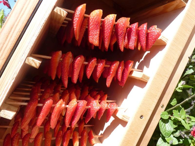 s choir fruits solaire s chez et conservez vos fruits